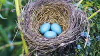 Form and Function: Bird Nests and Eggs
