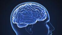 Neural Codes in the Brain