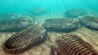 Incredible Variety-The Cambrian Explosion
