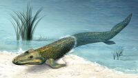 Tiktaalik-The Search for a Fishapod