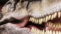 Letting the Dinosaurs Speak-Paleobehavior