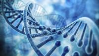 The Search for the Gene-DNA