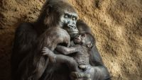 Are Other Animals Conscious?