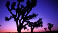 Pinnacles to Joshua Tree: The San Andreas
