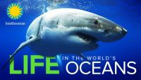 Life in the World's Oceans