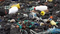 Marine Pollution-The Impact of Toxins