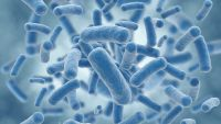 Probiotics and Our Bacterial Friends