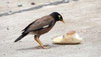 Bird Brains: Tool Wielders and Snack Stealers