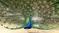 Avian Turf Wars: Defending a Territory