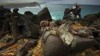 Photographing Island Wildlife