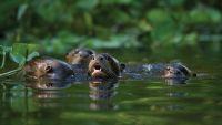 Documenting Biodiversity