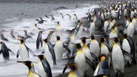 Antarctica: A Photographer's Paradise