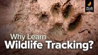 Why Learn Wildlife Tracking?