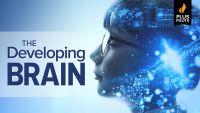 The Developing Brain