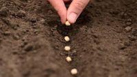 Seeds, Seedlings, and Transplants