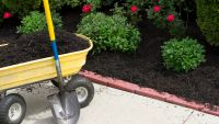 Spring and Summer Care of Trees and Shrubs