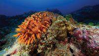 Beaches, Estuaries, and Coral Reefs