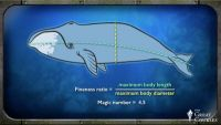 Mammalian Swimming and Buoyancy