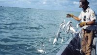 Marine Mammal Interactions with Fisheries