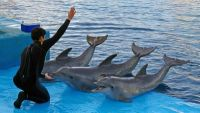 Intelligence in Marine Mammals