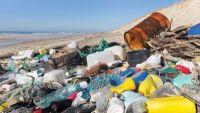 The Urban Ocean: Human Impact on Marine Life