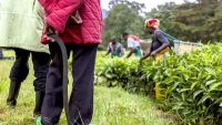 The Unthinkable - The Rwanda Genocide