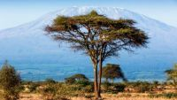 Safaris in East Africa