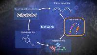 Omics: Genomics, Proteomics, Transcriptomics