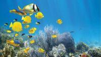 The Florida Keys: Tropical Paradise Parks