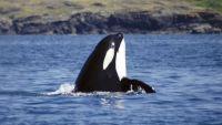 Washington's Orca Islands: The San Juans