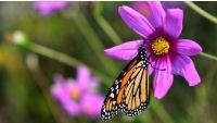 Plant Selection: Natives versus Non-Natives