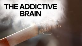 The Addictive Brain