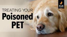 Plus Pilot: Treating Your Poisoned Pet