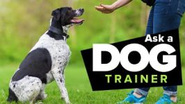 Ask a Dog Trainer