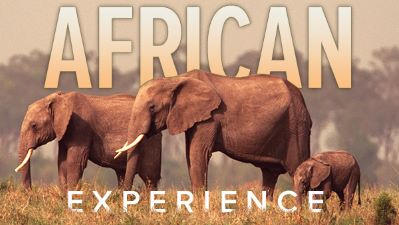 "The African Experience: From ""Lucy"" to Mandela"